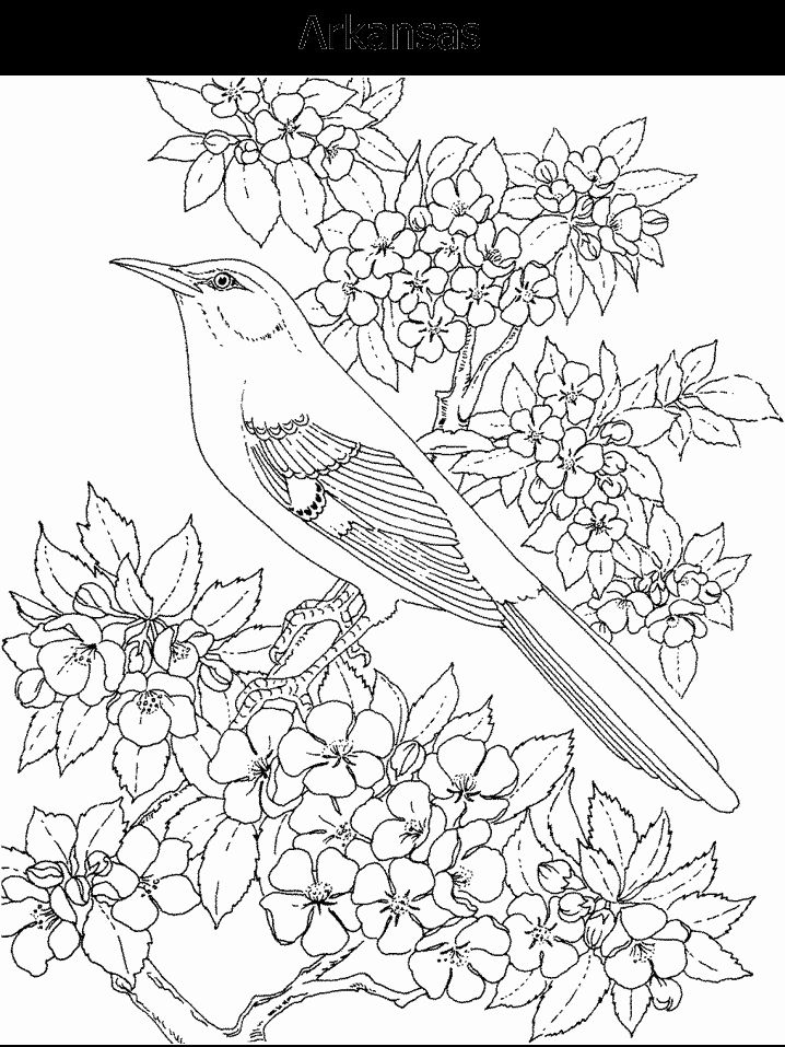 tn state bird tennessee state bird and flower coloring page state tn bird