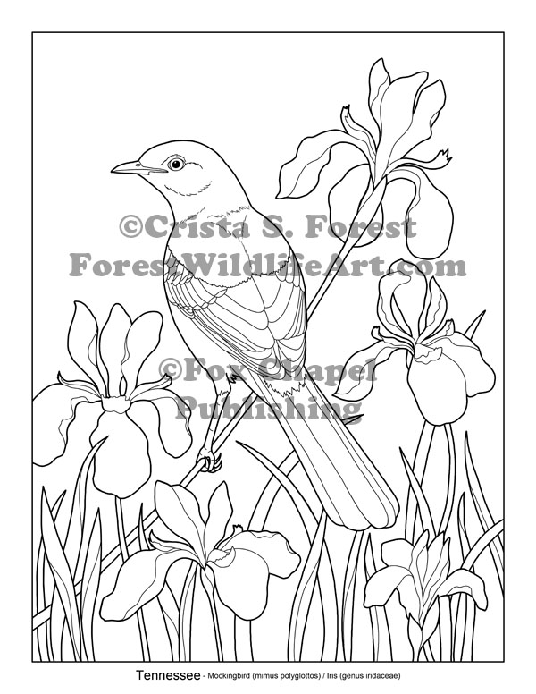tn state bird tennessee state bird coloring page coloring page blog tn bird state