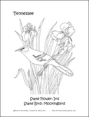 tn state bird texas state symbols coloring pages coloring home state tn bird