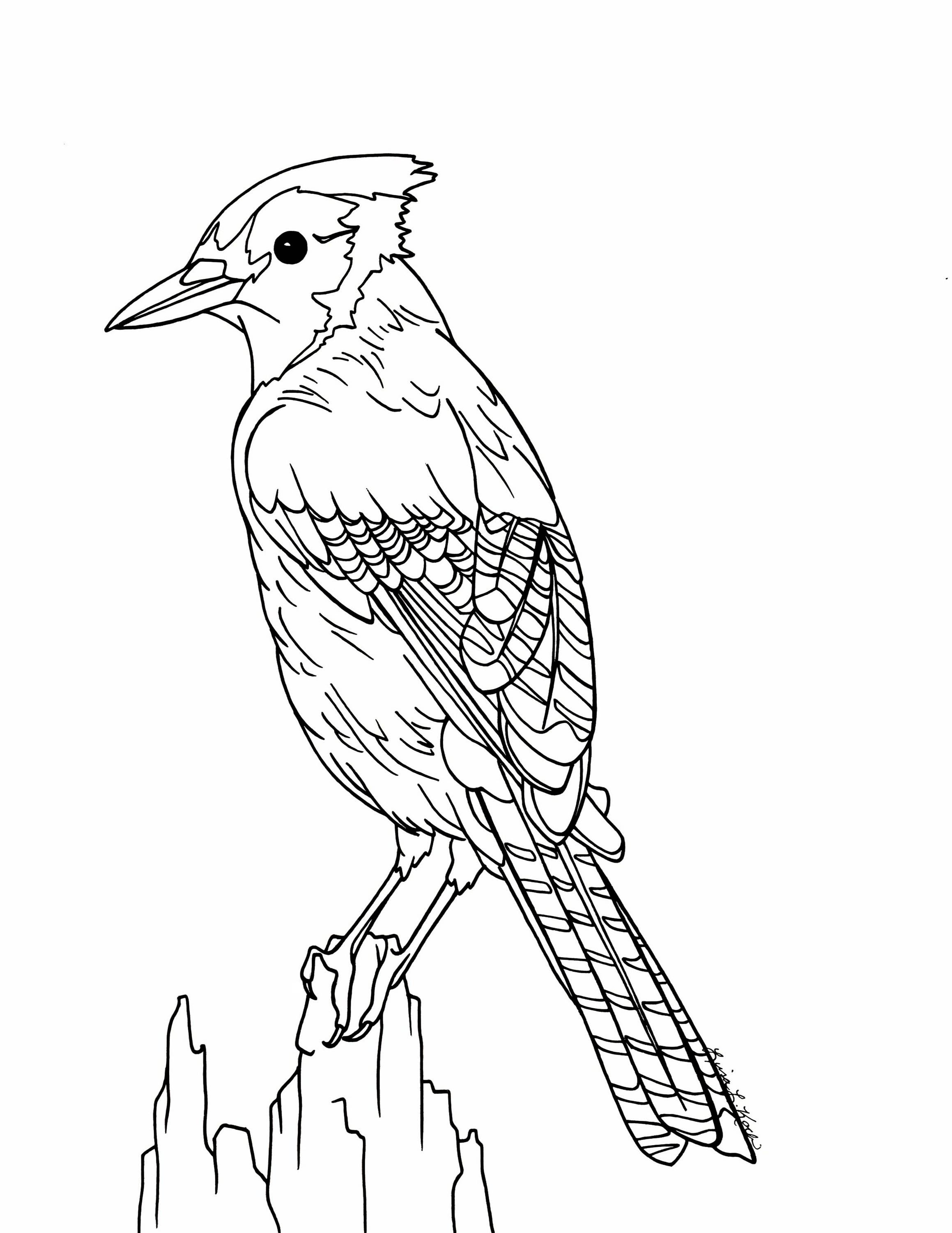 toronto blue jays coloring pages blue jay coloring download blue jay coloring for free 2019 pages coloring toronto blue jays