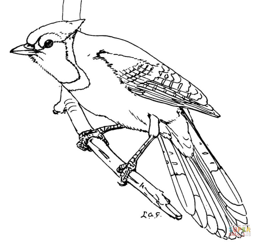 toronto blue jays coloring pages download blue jay coloring for free designlooter 2020 toronto blue jays pages coloring