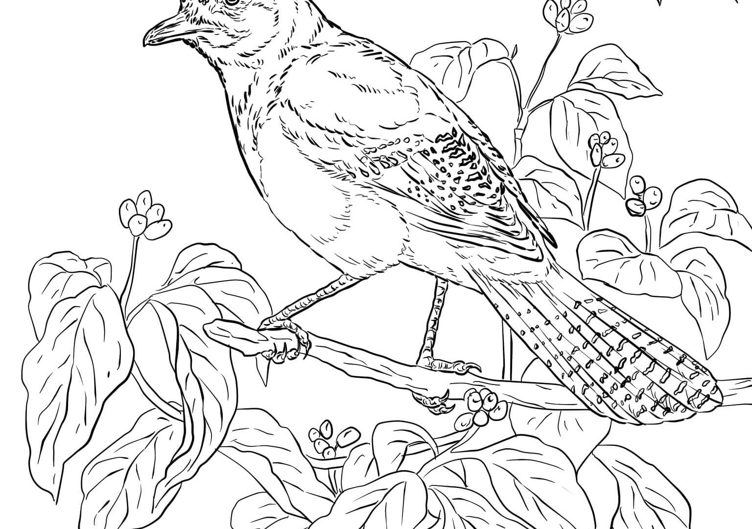 toronto blue jays coloring pages toronto blue jays coloring pages at getdrawings free pages jays coloring blue toronto