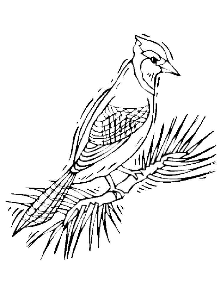 toronto blue jays coloring pages toronto blue jays coloring pages at getdrawings free toronto coloring pages jays blue