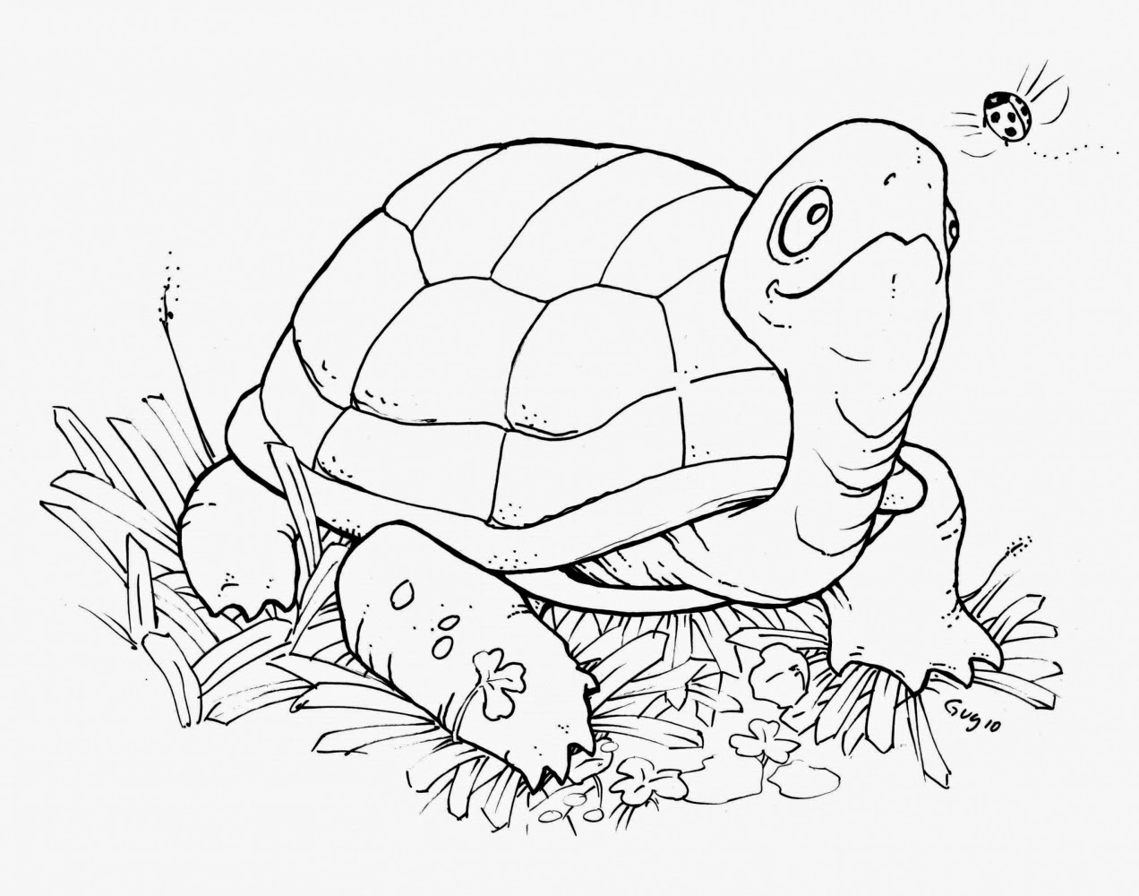 tortoise coloring page coloring pages turtles free printable coloring pages tortoise coloring page 1 1