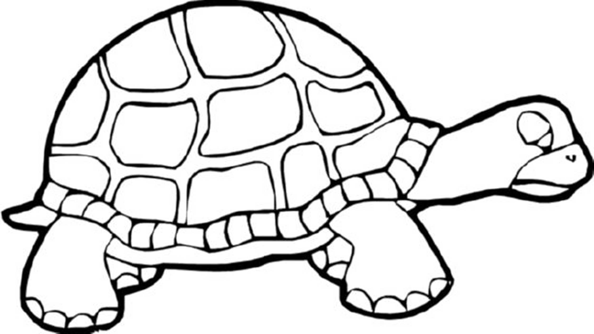 tortoise coloring page turtles coloring pages download and print turtles coloring page tortoise