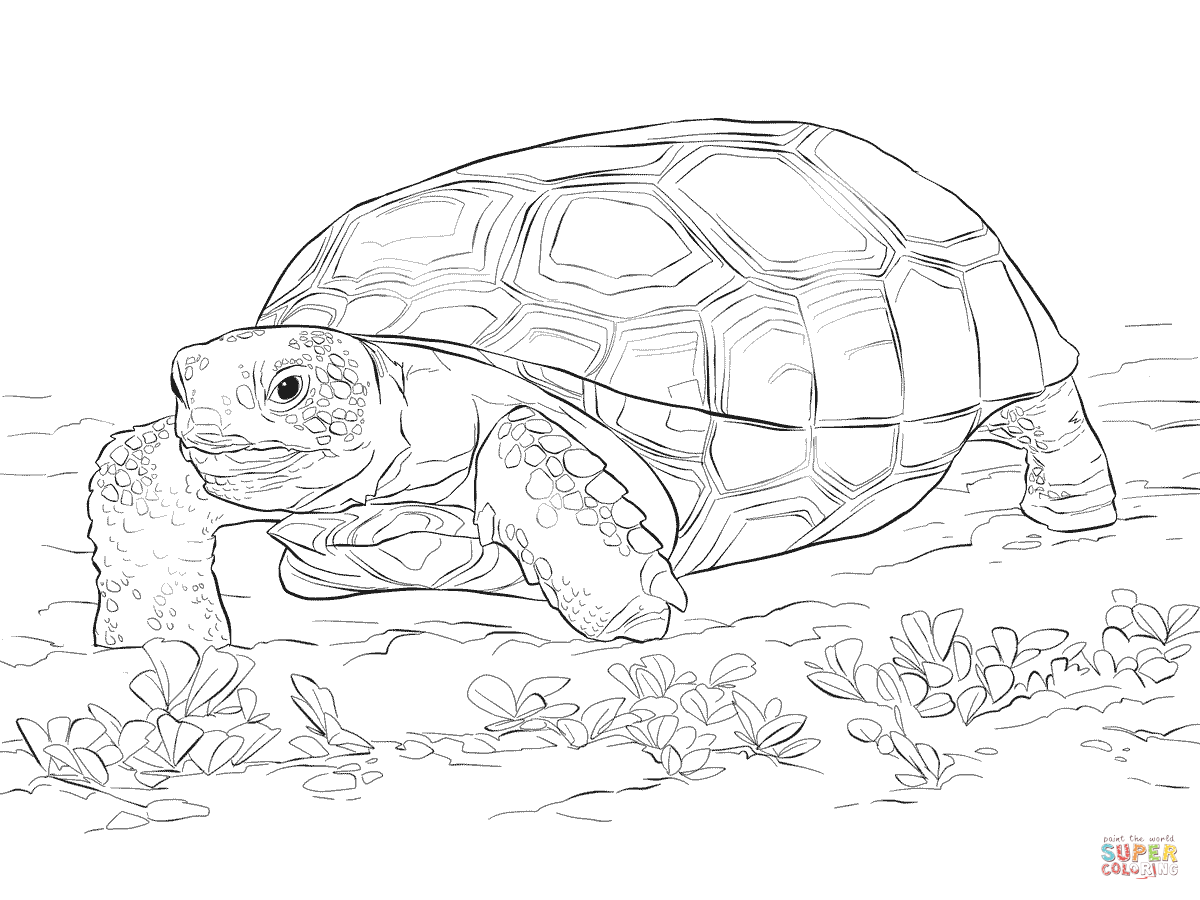 tortoise coloring page yertle the turtle coloring pages coloring home tortoise page coloring