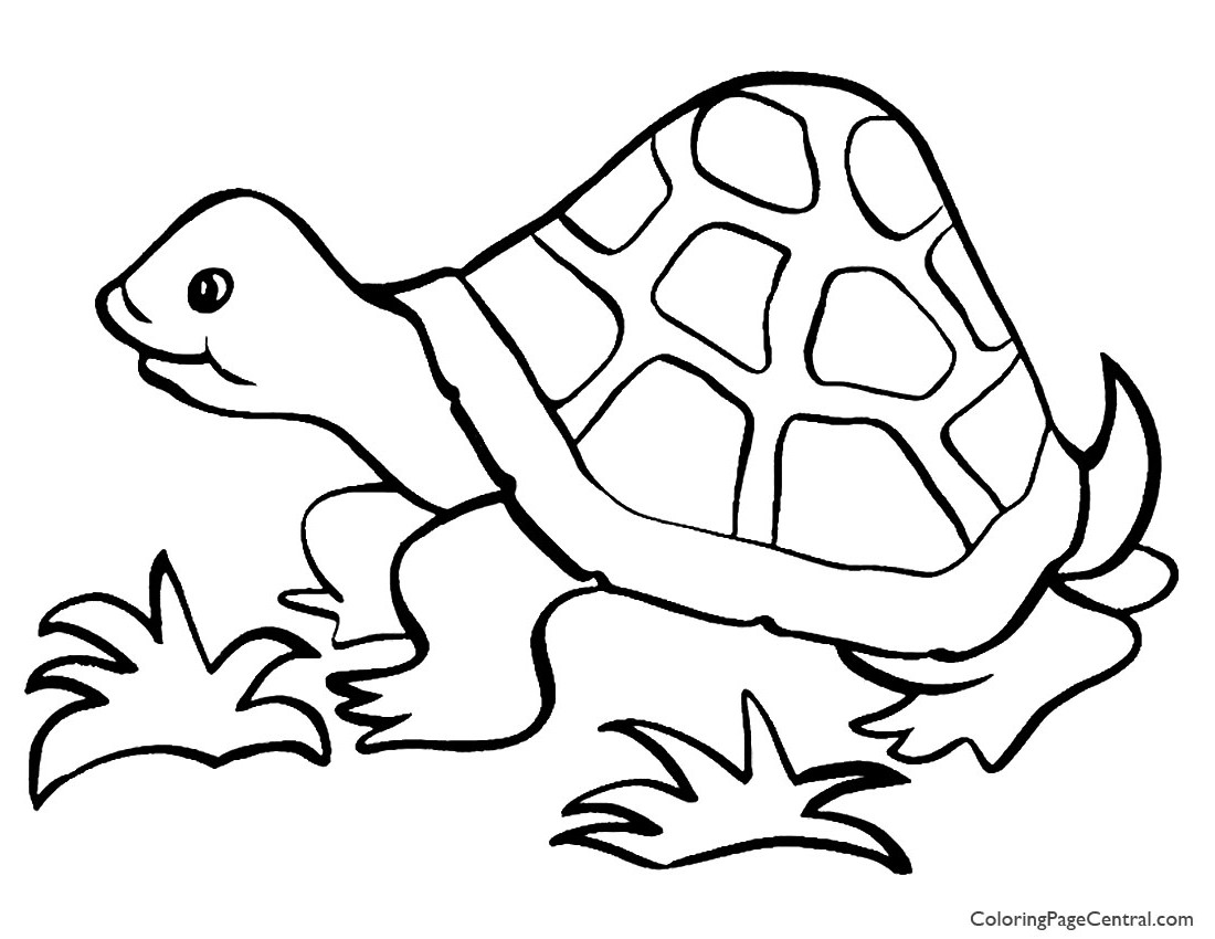 tortoise colouring pictures turtles for children turtles kids coloring pages colouring pictures tortoise