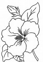 traceable pictures of flowers rose flower outline and coloring picture with interesting of flowers traceable pictures