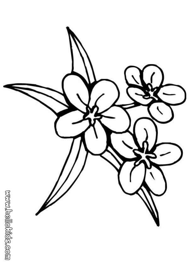 traceable pictures of flowers season worksheet crafts and worksheets for preschool traceable of pictures flowers