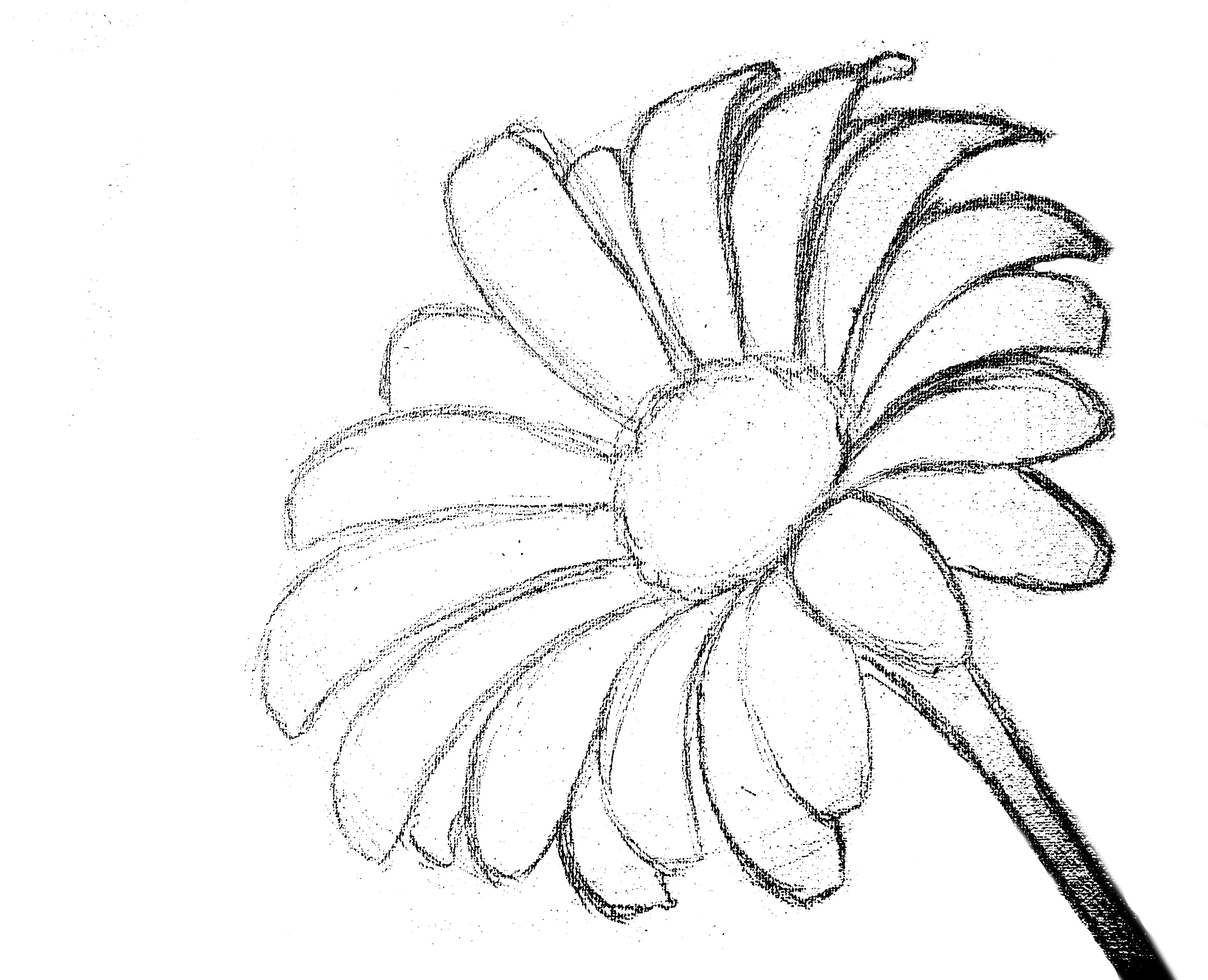 traceable pictures of flowers traceable flower templates clipart best traceable of pictures flowers