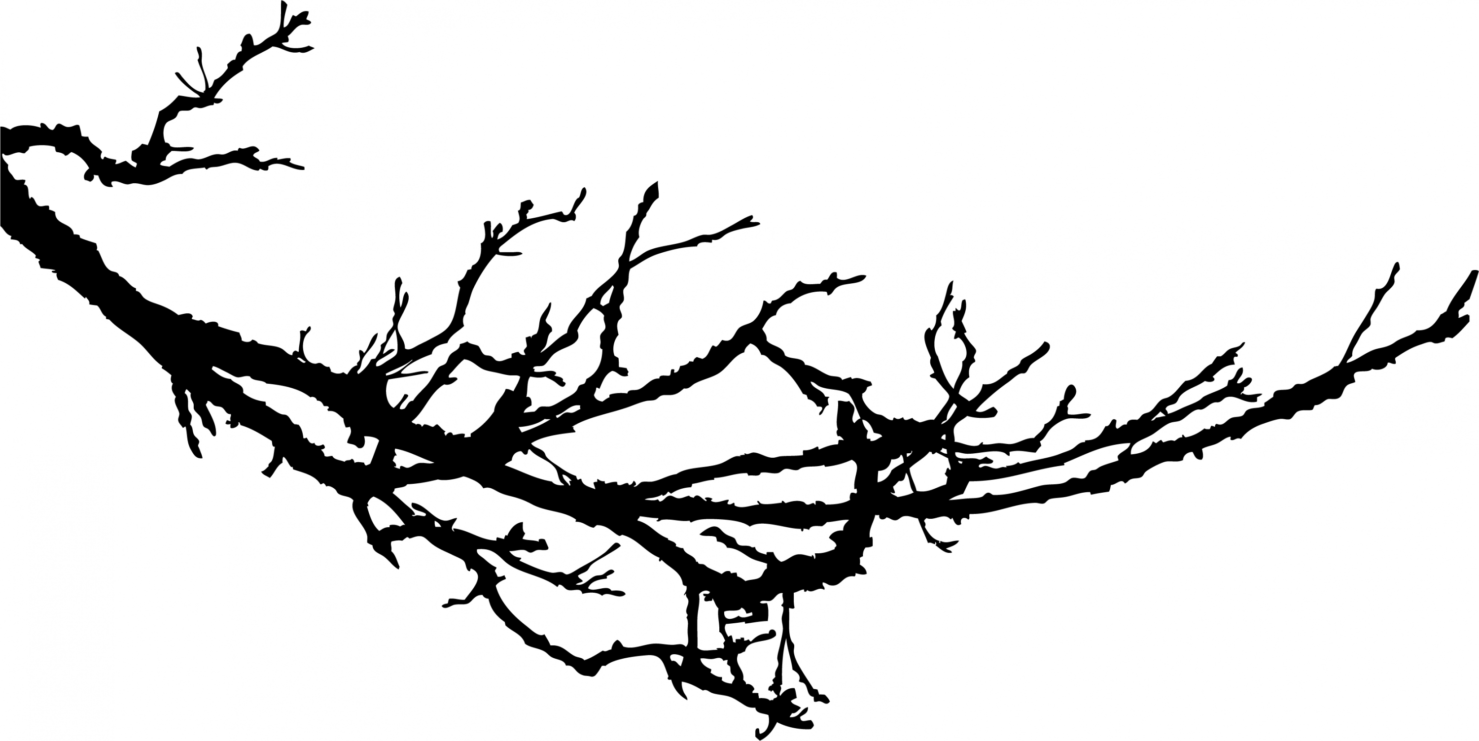 tree branch silhouette 12 tree branch silhouette png transparent vol 3 silhouette tree branch