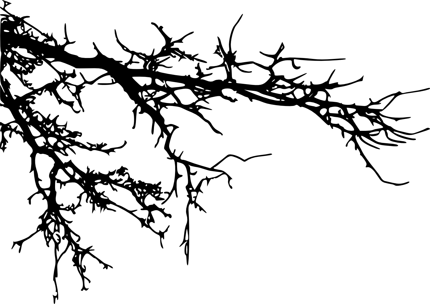tree branch silhouette 15 tree branch silhouettes png transparent onlygfxcom branch tree silhouette