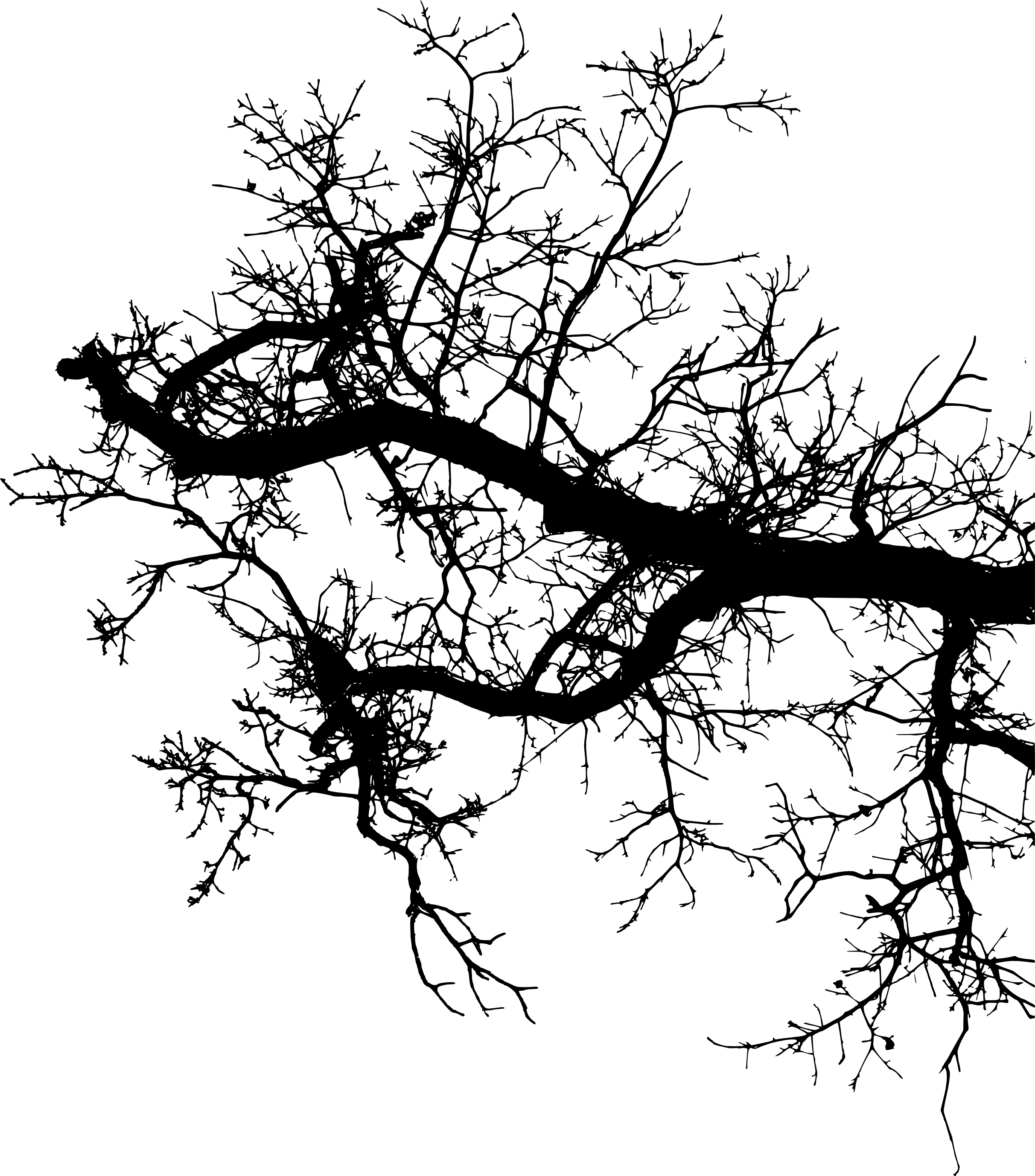 tree branch silhouette silhouette tree branches at getdrawings free download branch silhouette tree