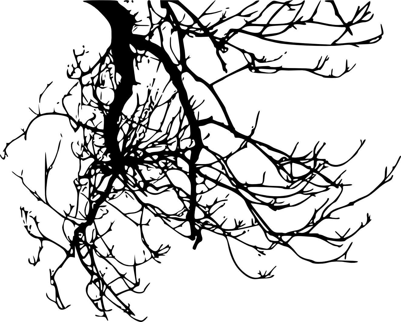 tree branch silhouette tree branch silhouette tree branch silhouette
