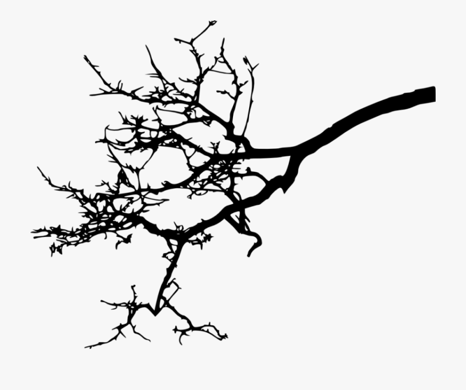 tree branch silhouette tree branch without leaves silhouettes set isolated on branch silhouette tree