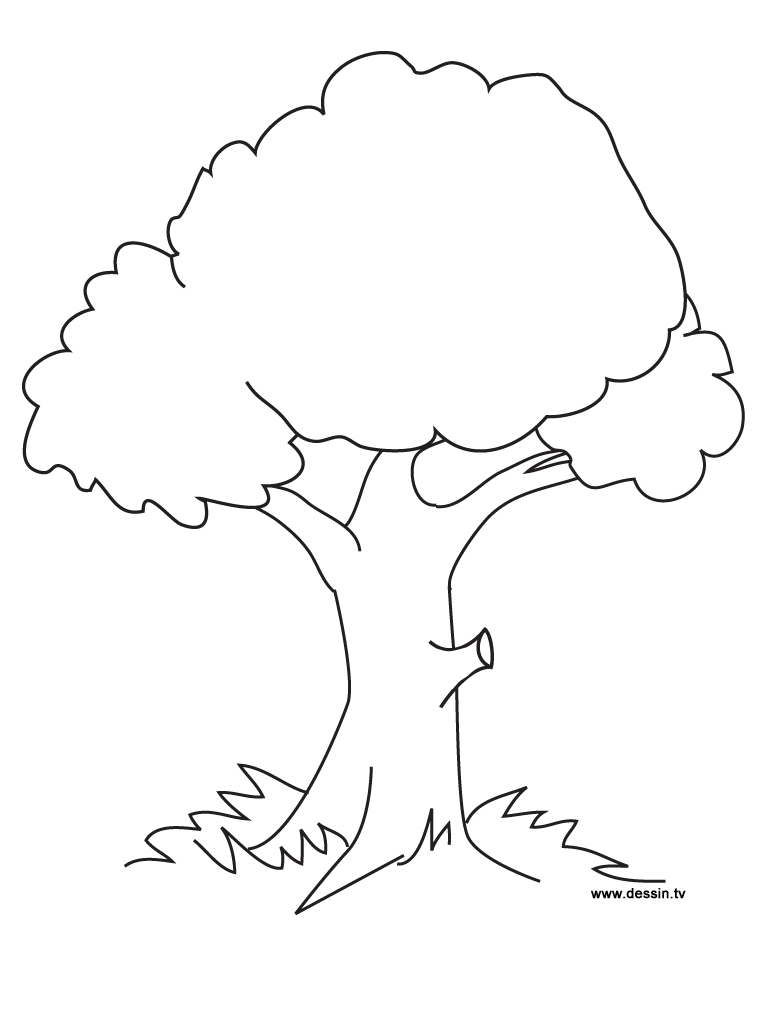 tree clipart coloring fall tree printable clipart best clipart coloring tree