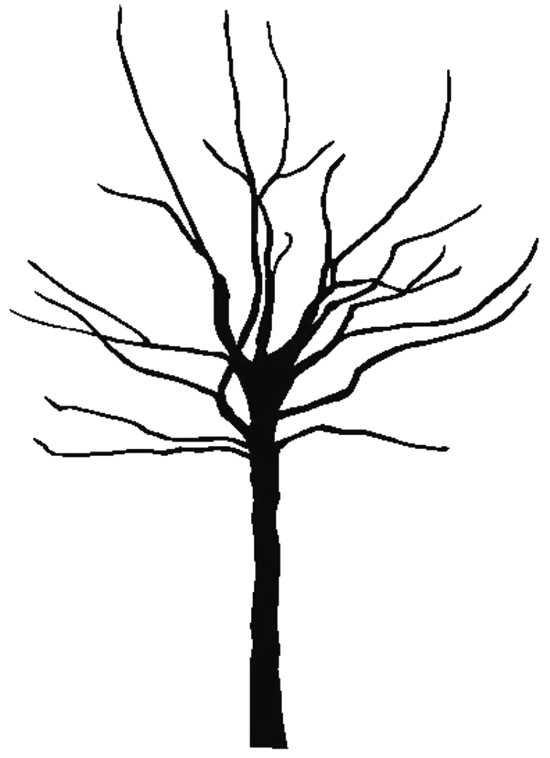 tree clipart coloring fig tree coloring page at getcoloringscom free coloring clipart tree