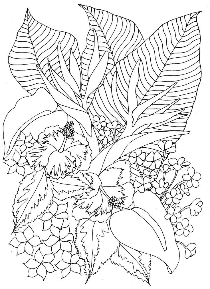 tropical coloring sheets paradise coloring pages at getdrawings free download coloring tropical sheets