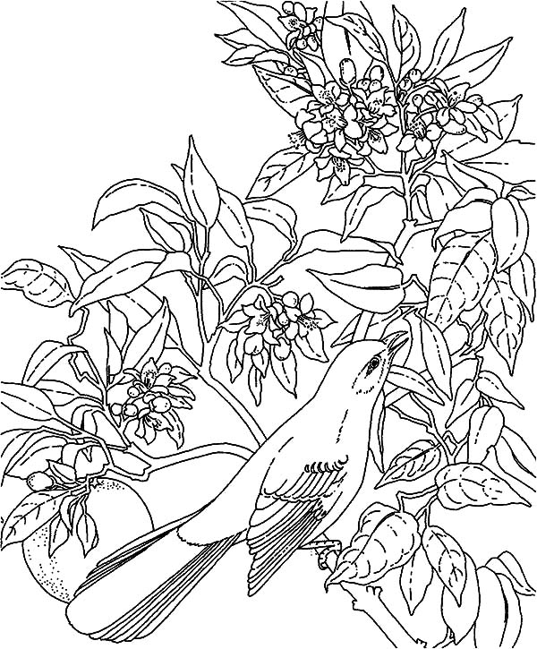 tropical coloring sheets rainforest trees drawing at getdrawings free download sheets coloring tropical