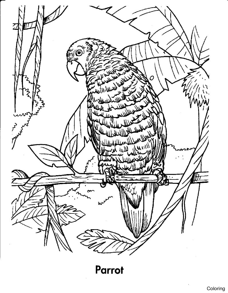 tropical coloring sheets tropical leaf drawing at getdrawings free download tropical sheets coloring
