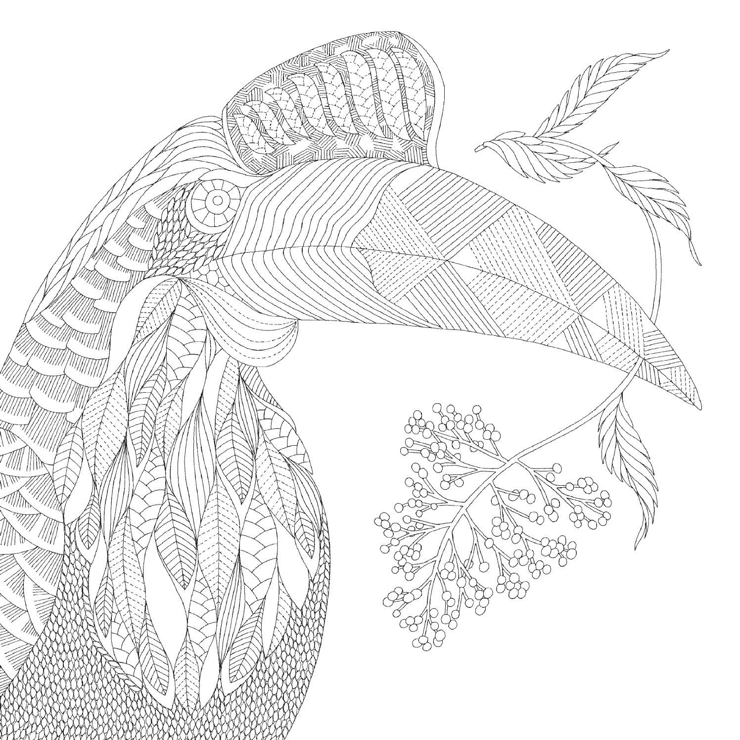 tropical coloring sheets tropical rainforest drawing at getdrawings free download sheets tropical coloring