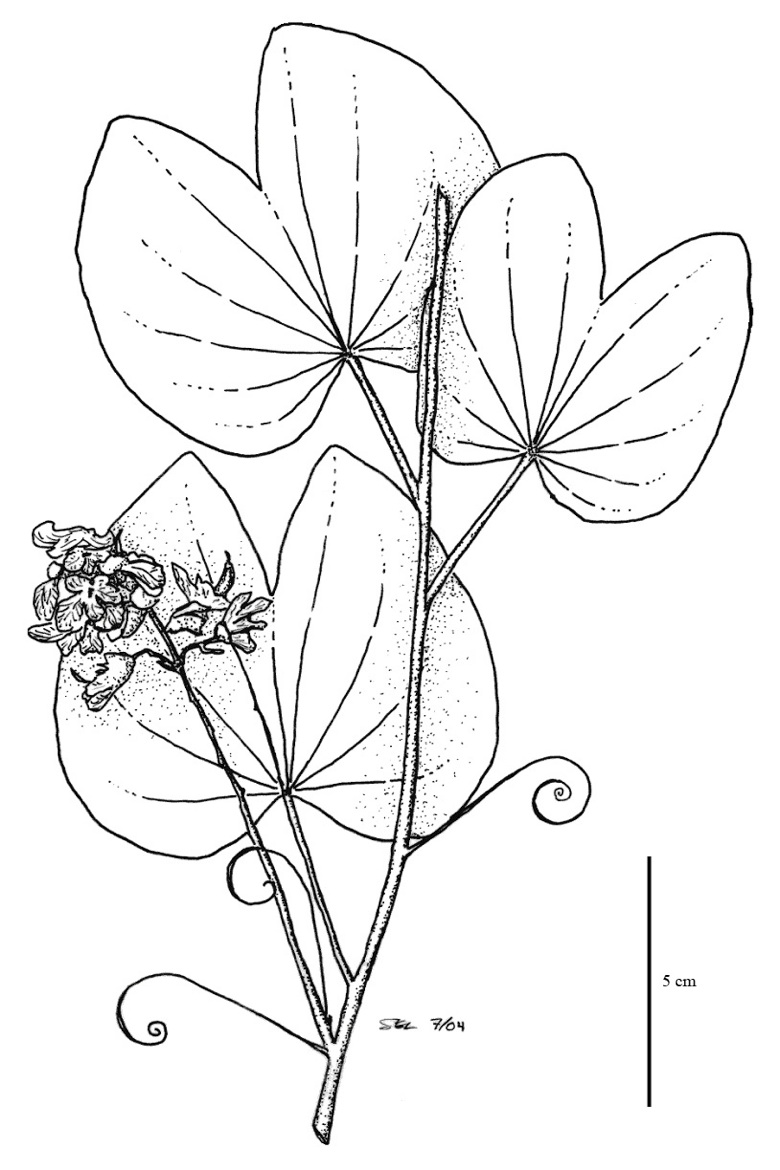 tropical leaf coloring image result for free coloring pages tropical leaf coloring tropical leaf