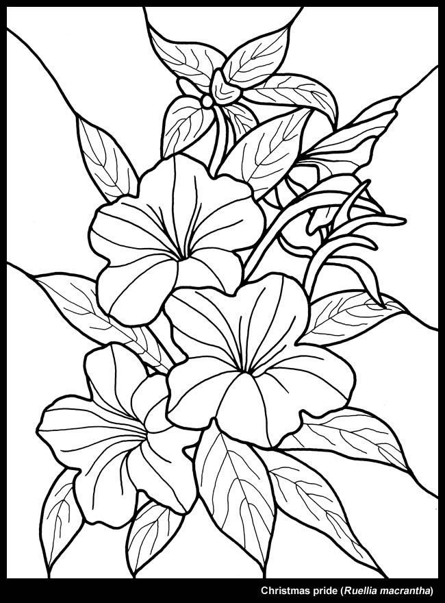 tropical leaf coloring the sneakpeek for the next gift of the day tomorrow do coloring tropical leaf