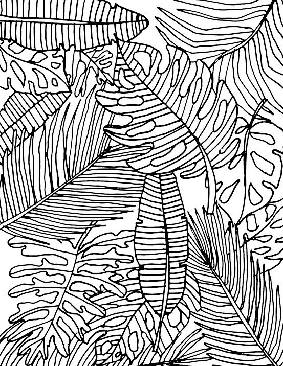 tropical leaf coloring tropical leaves coloring page tropical coloring leaf