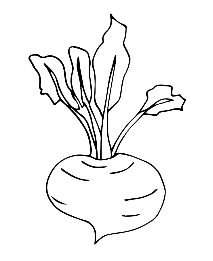 turnip color turnip coloring page free transparent clipart clipartkey color turnip