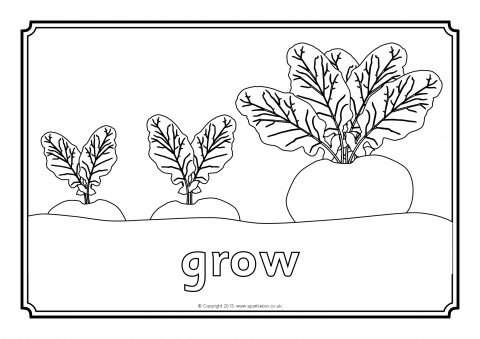 turnip pictures color 1000 images about applique templates on pinterest pictures turnip color