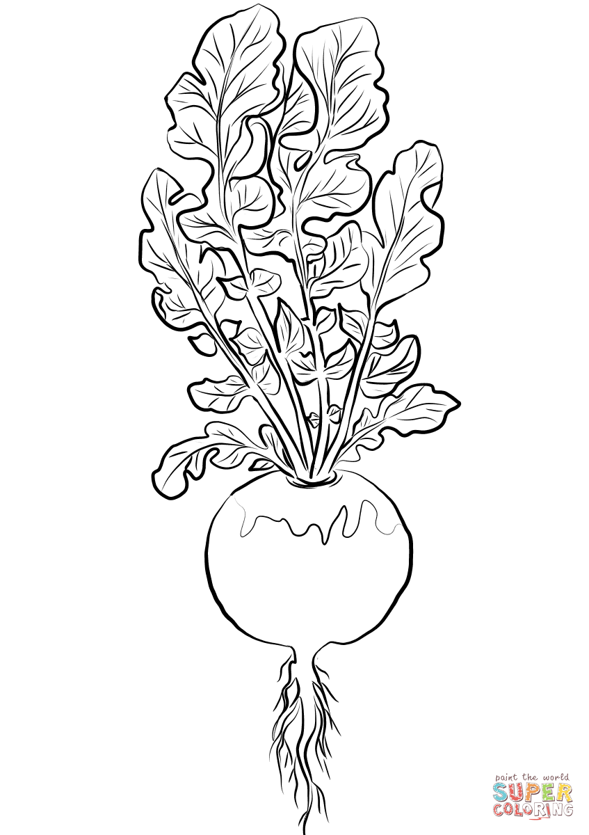 turnip pictures color turnip coloring pages download and print turnip coloring pictures color turnip