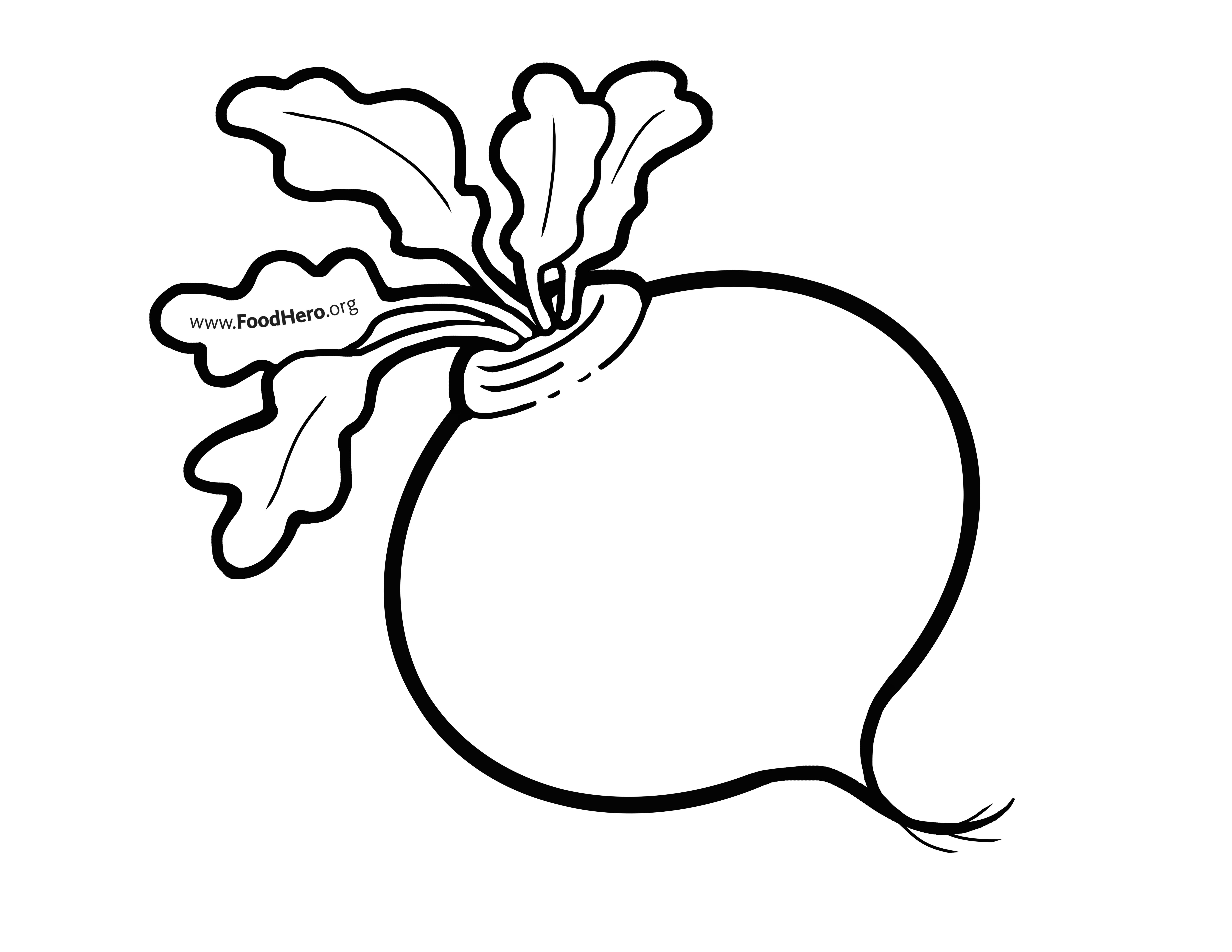 turnip pictures color turnip drawing at getdrawings free download turnip color pictures