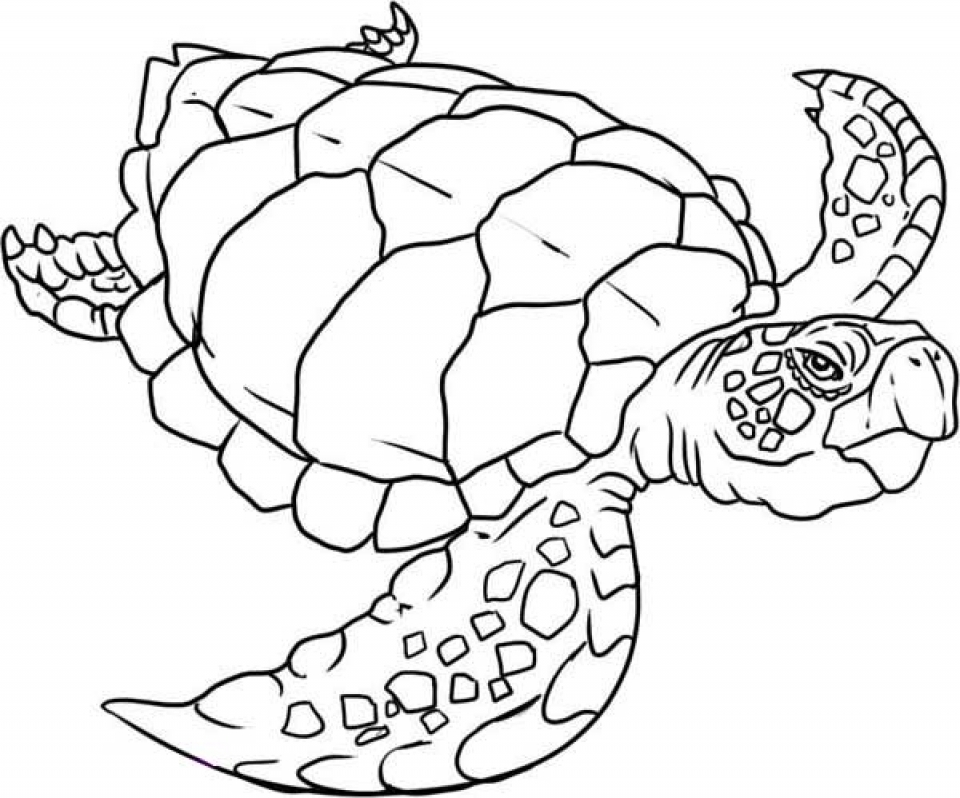 turtle coloring book page get this turtle coloring pages free for kids e9bnu coloring book turtle page