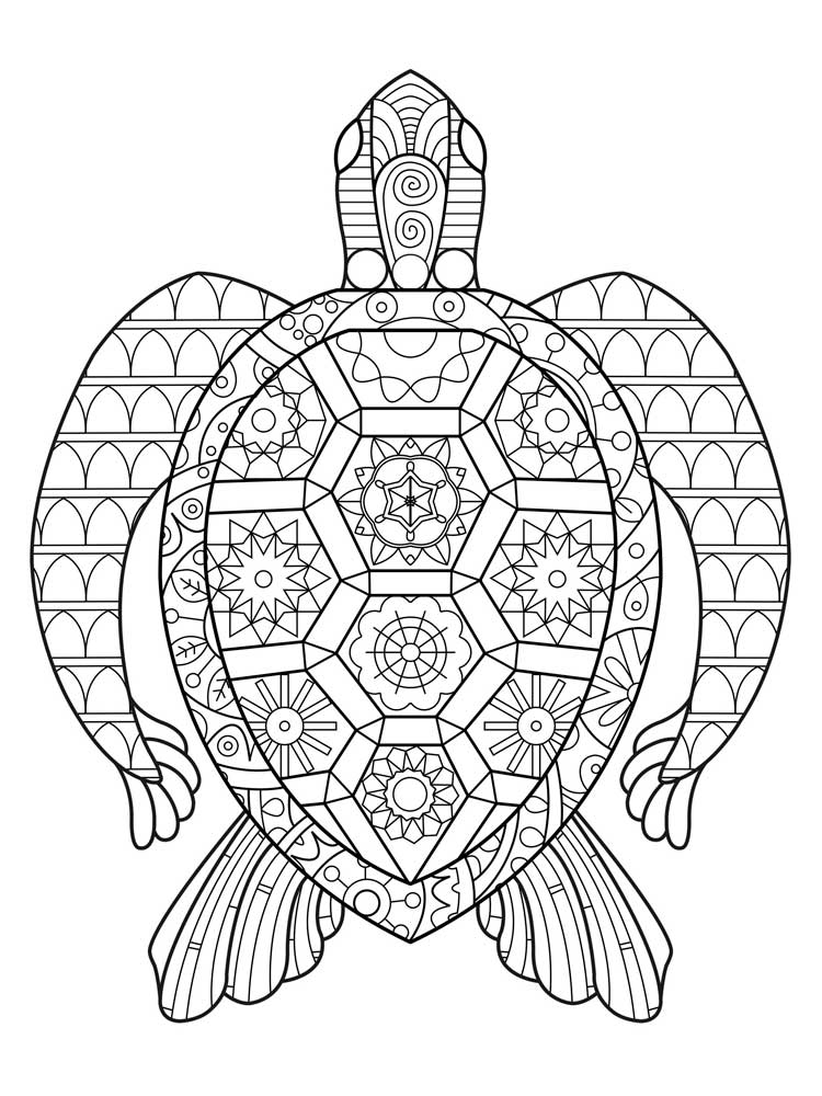 turtle coloring book page print download turtle coloring pages as the turtle book page coloring