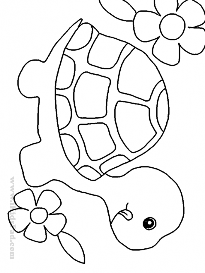 turtle coloring pictures to print free printable turtle coloring pages for kids to pictures turtle print coloring