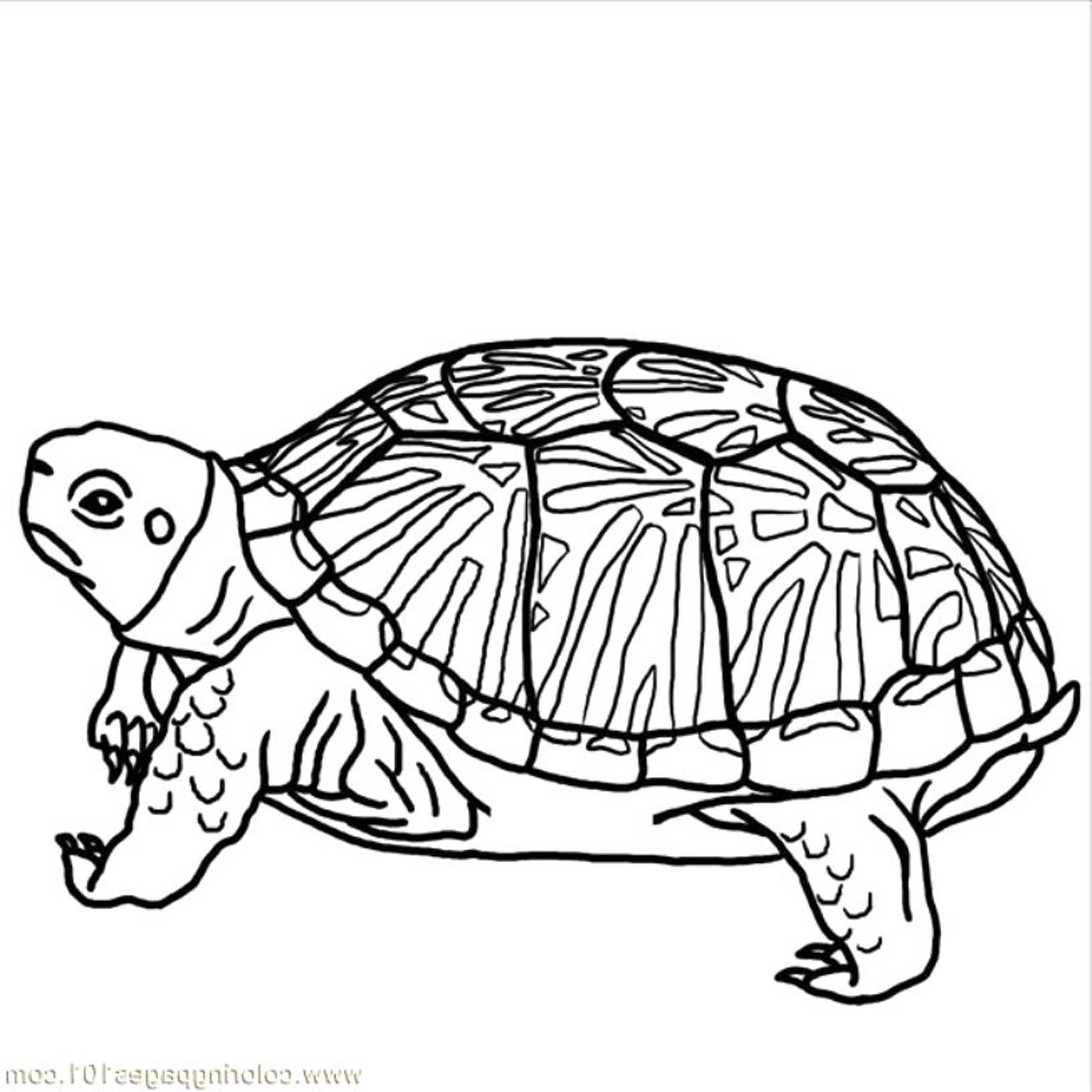 turtle pictures for coloring free printable turtle coloring pages for kids pictures coloring for turtle