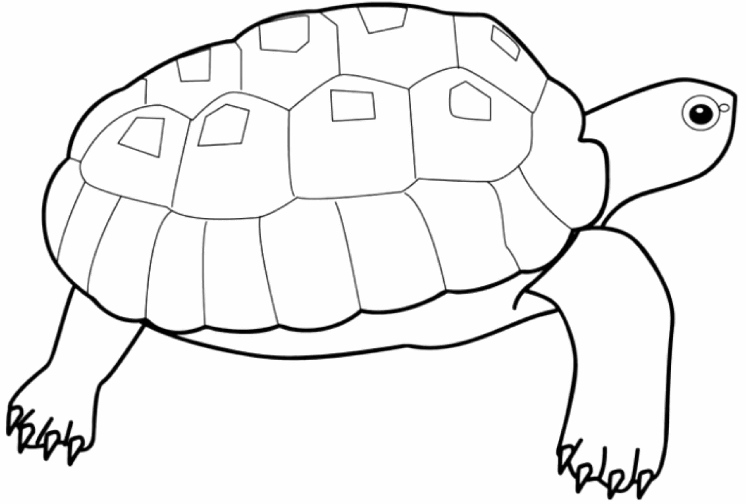 turtle pictures for coloring sea turtle drawing at getdrawings free download for pictures turtle coloring