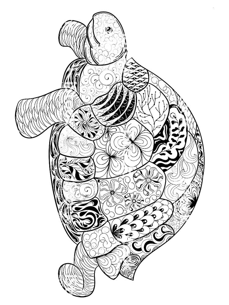 turtle printable coloring pages free printable turtle coloring pages for kids printable pages turtle coloring