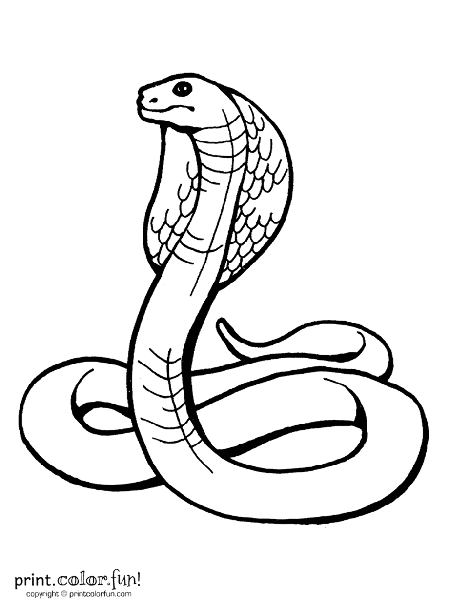 two headed snake coloring page king cobra two headed snake coloring pages print headed snake page coloring two