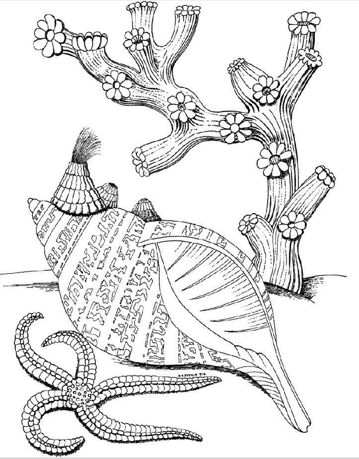 under the sea coloring pages pdf under the sea coloring pages pdf pdf coloring sea the pages under
