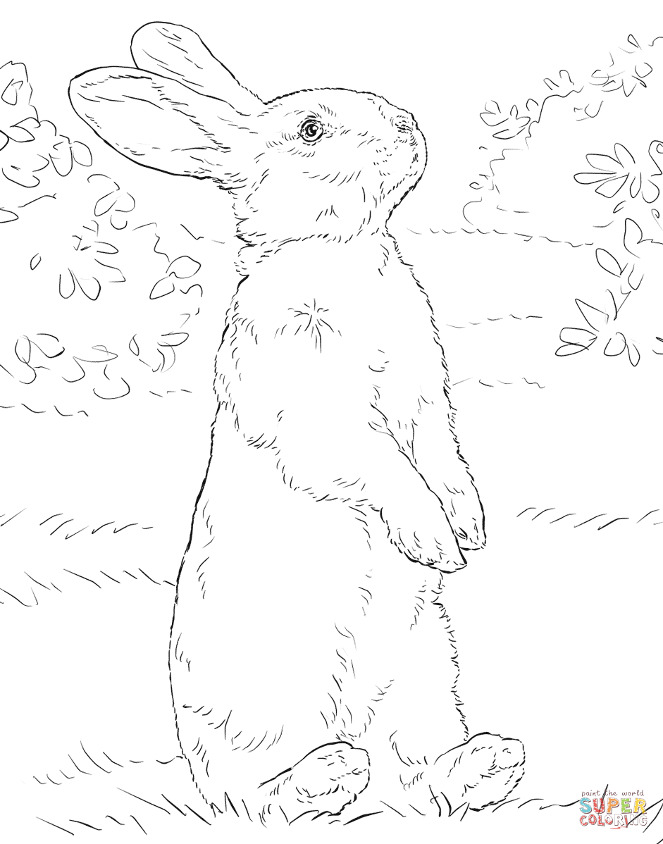 velveteen rabbit coloring pages 81 best domestic animals coloring pages images on coloring velveteen rabbit pages