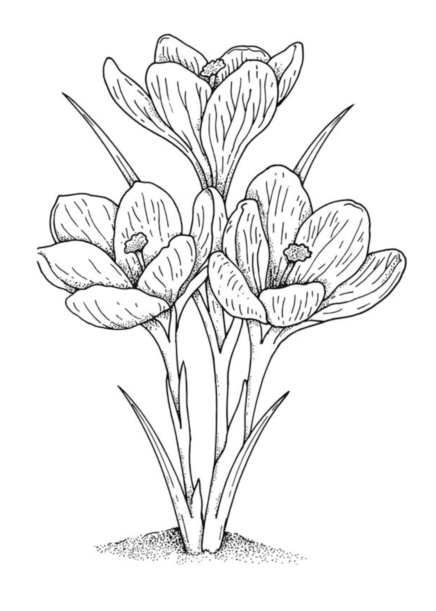 vintage flower coloring pages coloring book for adult and older children coloring page flower coloring vintage pages