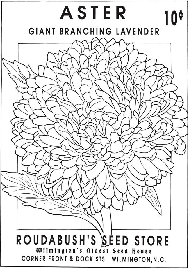 vintage flower coloring pages drawing flower flowers adult coloring pages page 4 coloring vintage flower pages