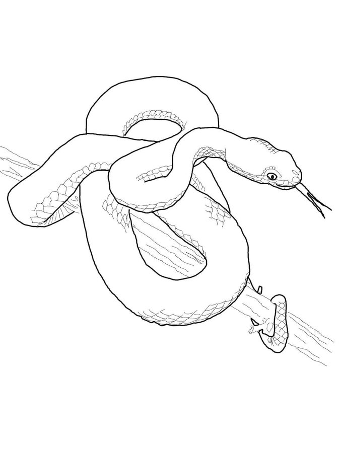 viper coloring pages coloring pages little cute viper on the tree stock coloring viper pages