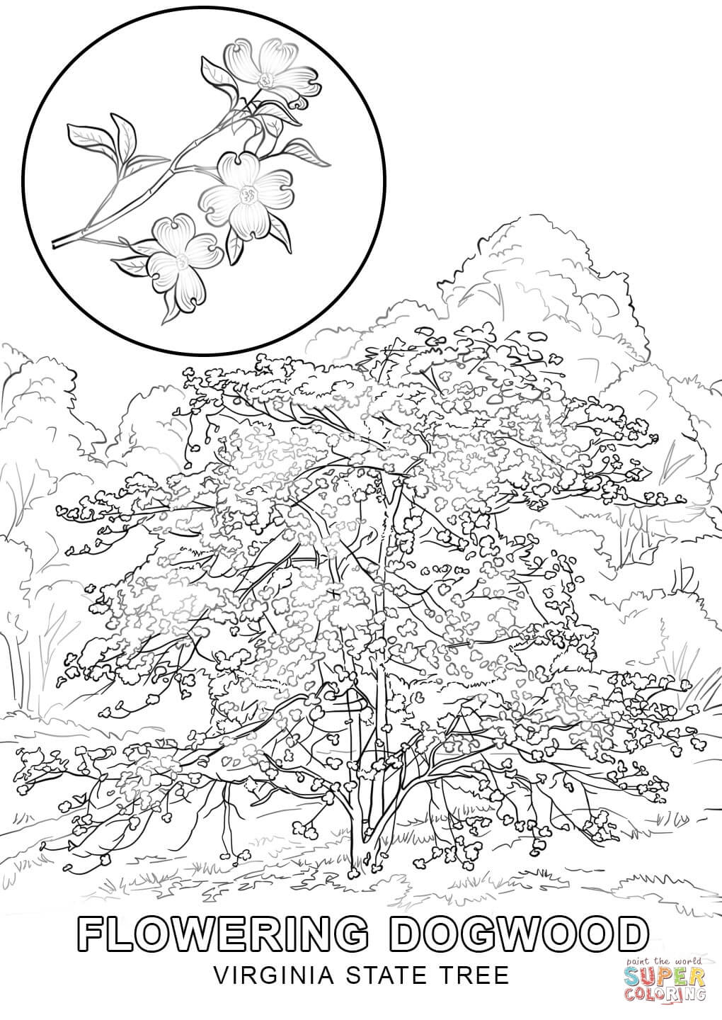virginia state symbols coloring pages virginia state tree coloring page free printable coloring pages virginia symbols state