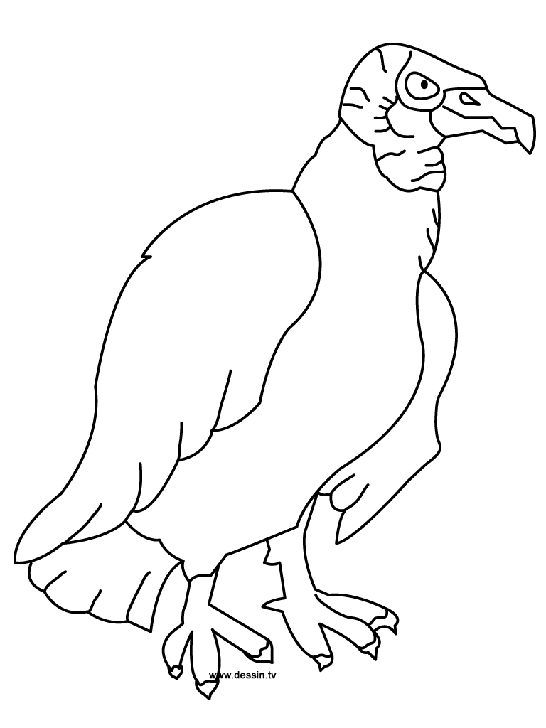 vulture coloring pages vulture coloring pages preschool and kindergarten bird vulture pages coloring