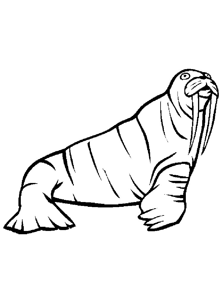 walrus coloring pages free walrus coloring pages coloring pages walrus