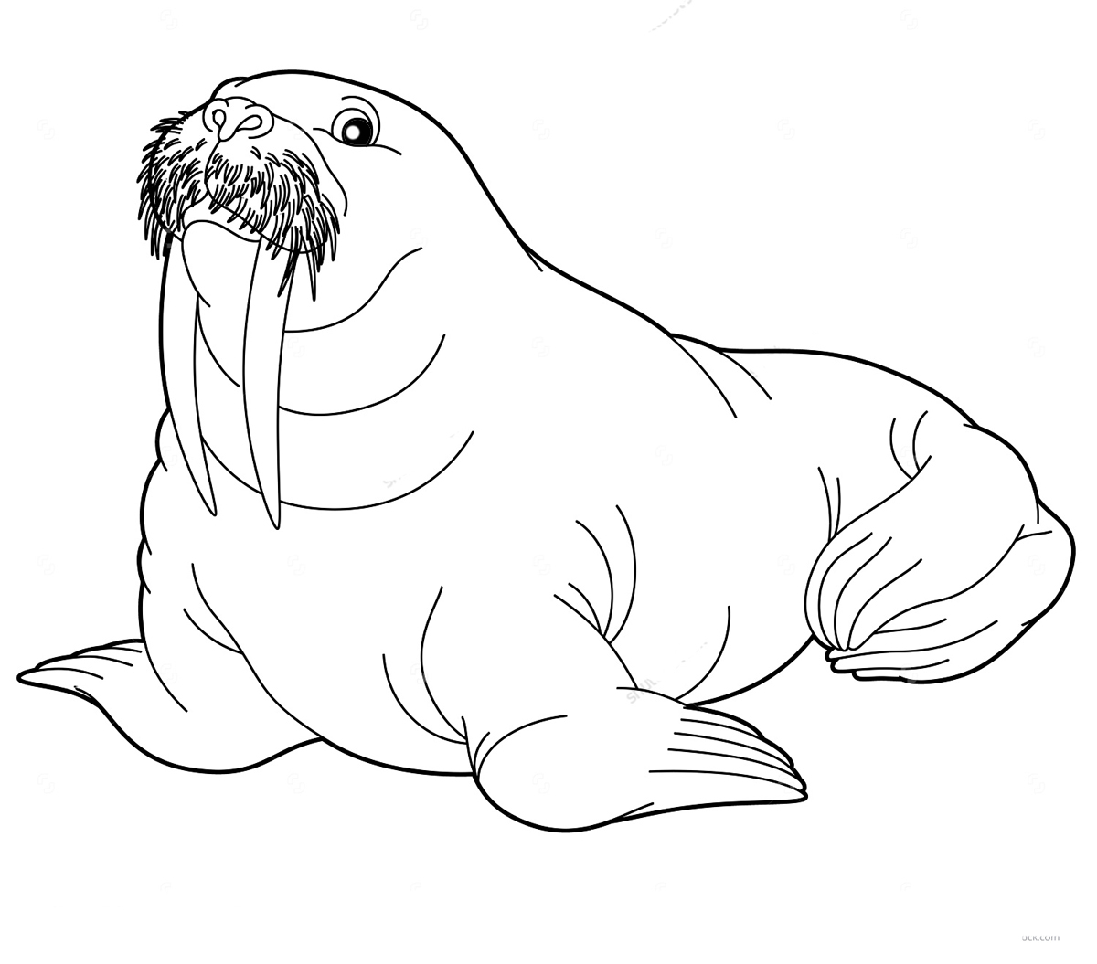 walrus coloring pages free walrus coloring pages download and print walrus pages walrus coloring