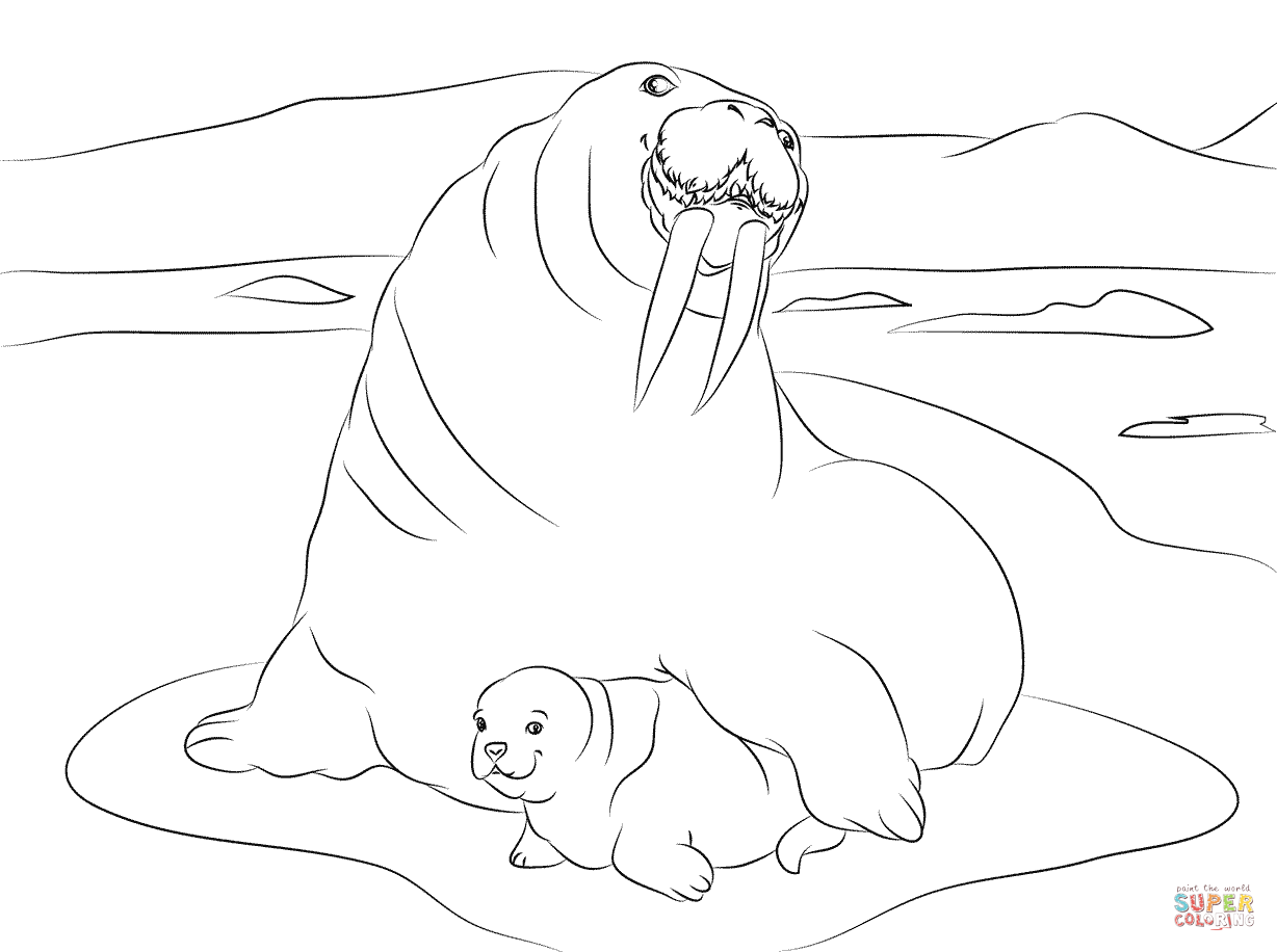 walrus coloring pages walrus coloring download walrus coloring for free 2019 walrus pages coloring