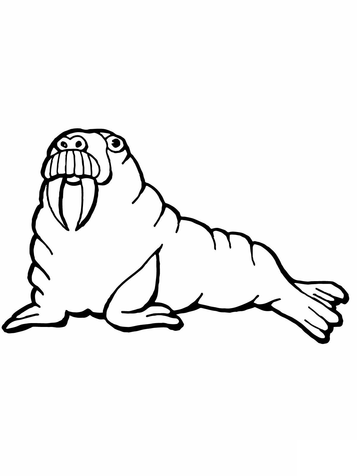 walrus coloring pages walrus coloring pages coloring pages to download and print walrus pages coloring